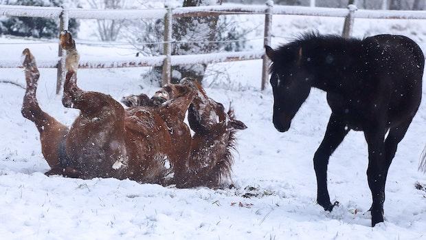 Winter-Wunder-Land lockt Spaziergänger
