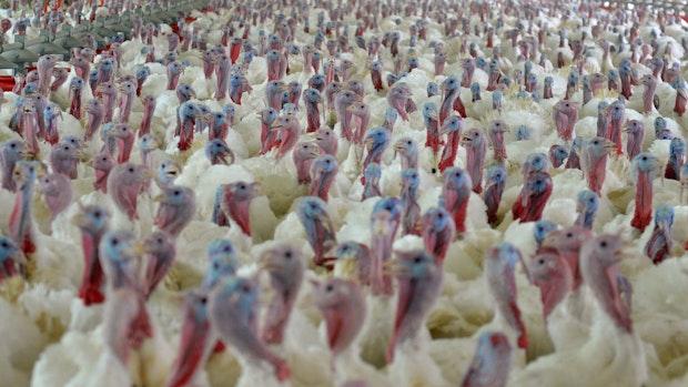 Erste Fälle von Vogelgrippe bei Menschen nachgewiesen