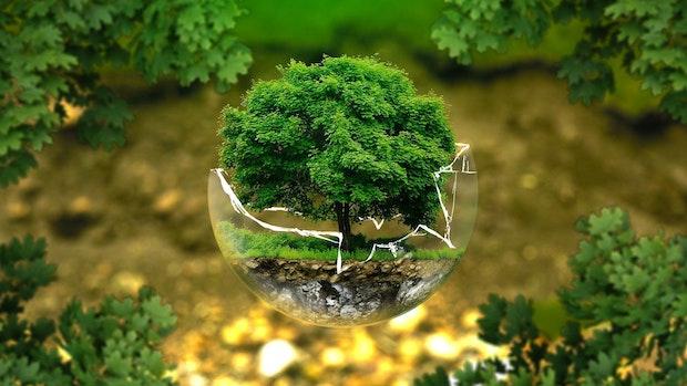 Wer leistet mehr für den Umweltschutz in Dinklage? BfD oder CDU?