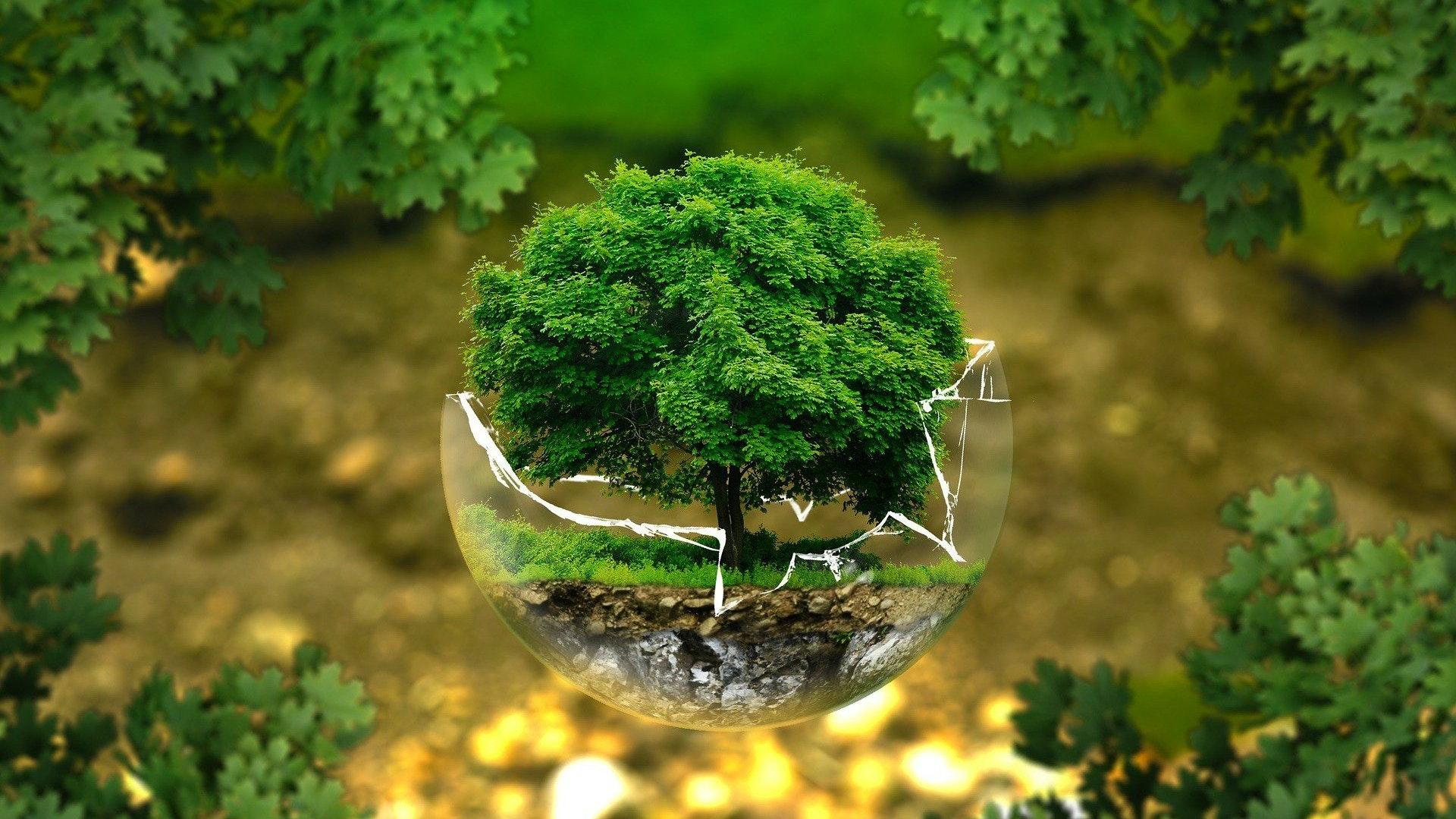 Die Umwelt im Blick: Das haben nach eigenen Angaben sowohl das Bürgerforum als auch die CDU. Welcher Weg der bessere ist, darüber sind sich die beiden Fraktionen indes ziemlich uneins. Foto: Pixabay