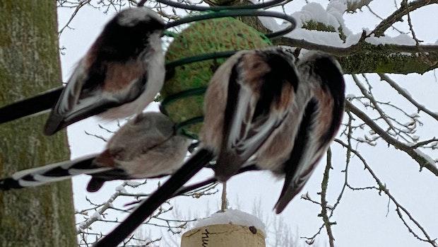 Wintervögel richtig füttern: Was Sie beachten müssen
