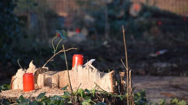 Der Umgang mit Natur und Umwelt entzweit Lohne
