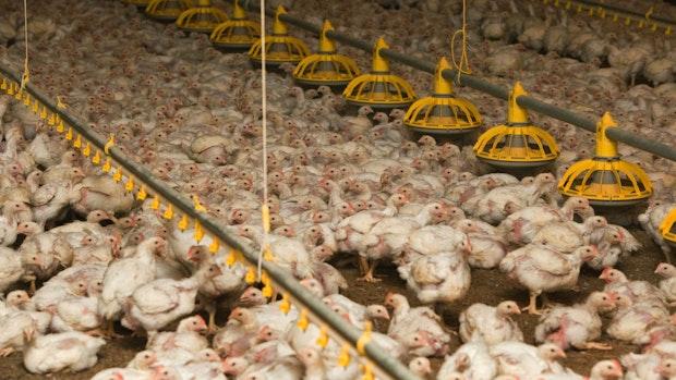Landkreise sollen Antibiotika-Kontrolle in Ställen übernehmen