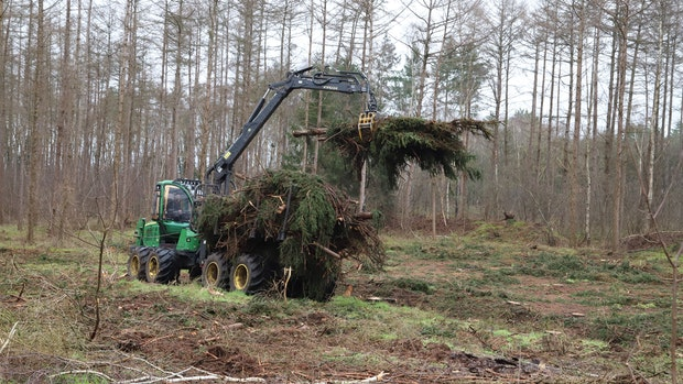 Der Kirchenwald ist nicht mehr zu retten