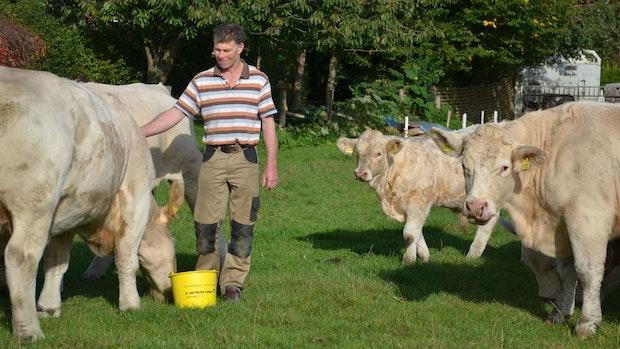 Rainer Moormann aus Herbergen vermarktet seine Charolais-Rinder selbst