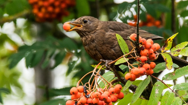 Die To-do-Liste: So wird Ihr Garten vogeltauglich und winterfest