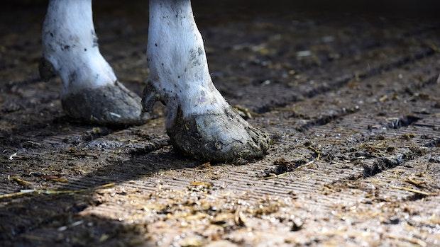 Schwere Vorwürfe gegen Landwirt aus Edewechterdamm