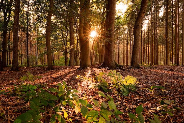 Am Vormittag ist im Oldenburger Münsterland noch oft die Sonne zu sehen. Foto: dpaAssanimoghaddam