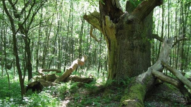Wie es im Dinklager Burgwald um den Schutz von Arten und Bäumen steht