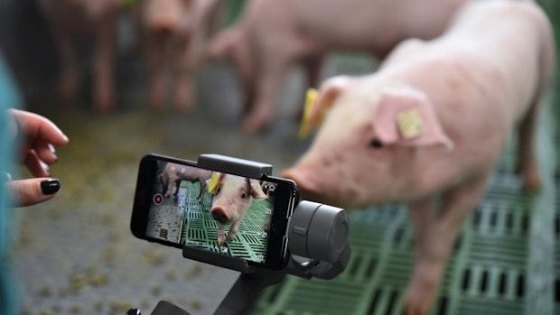 """Kamera und Sensoren im Stall: Projekt """"DigiSchwein"""" startet"""