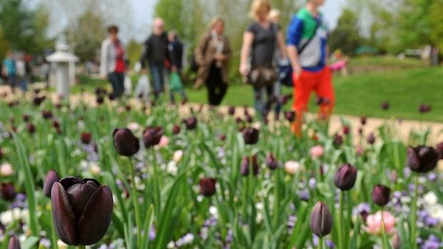 Park der Gärten im Ammerland verzeichnet 2021 Besucherrekord