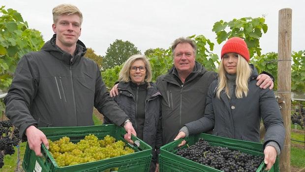 Erste Lese bei Osterloh: Goldener Wein kommt nun auch aus Hagstedt-Halter