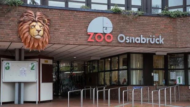Löwe greift Pflegerin im Osnabrücker Zoo an