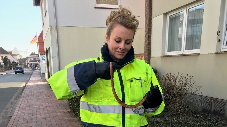 Ungiftig: Die Polizei holte die Kornnatter vor der Haustür des Westersteders ab. Foto: Polizei Westerstede