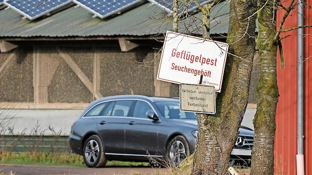 Geflügelpest: Neuer Fall dämpft Hoffnungen im Kreis Cloppenburg