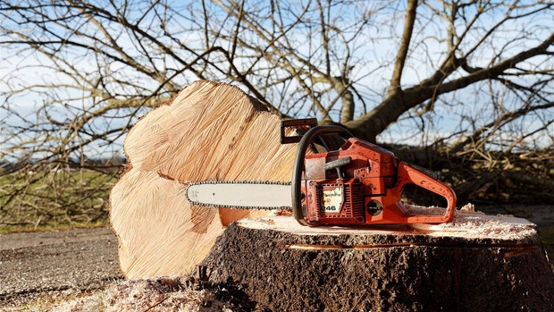 Ramsloh: Baumfällung in Wallhecke war zulässig