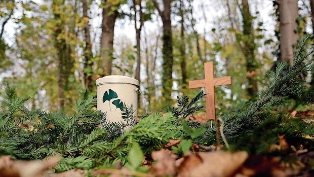 Entscheidung für Bestattungswald in den Bührener Tannen