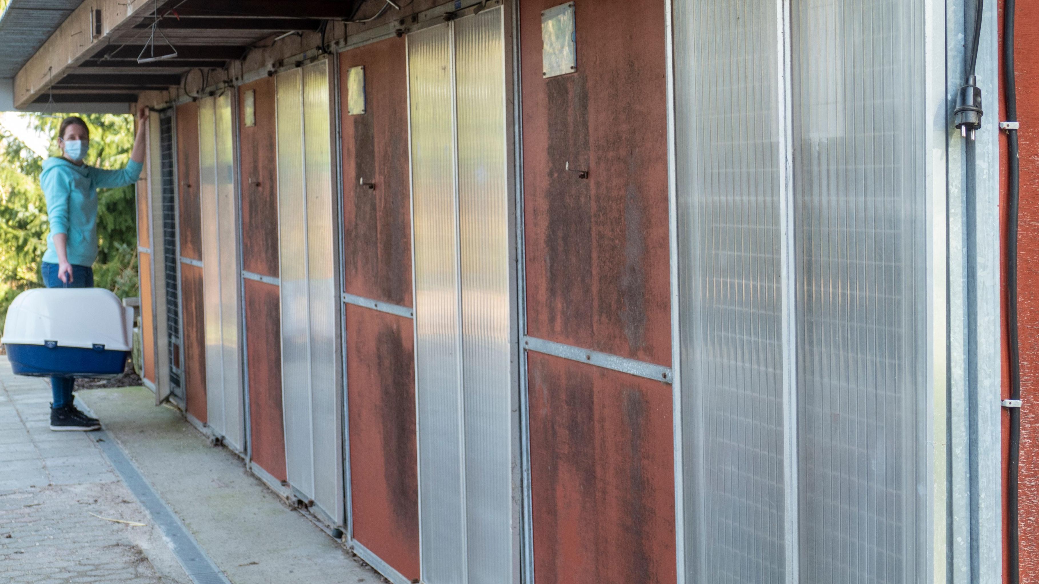 Baufällig: Den in die Jahre gekommenen Zwinger kann Karina Göbel, die Leiterin des Sedelsberger Tierheims, nicht mehr für die Unterbringung von Hunden nutzen. Die Plätze fehlen ebenso wie Auslaufflächen für Hunde und Gehege für Katzen. Foto: Stix
