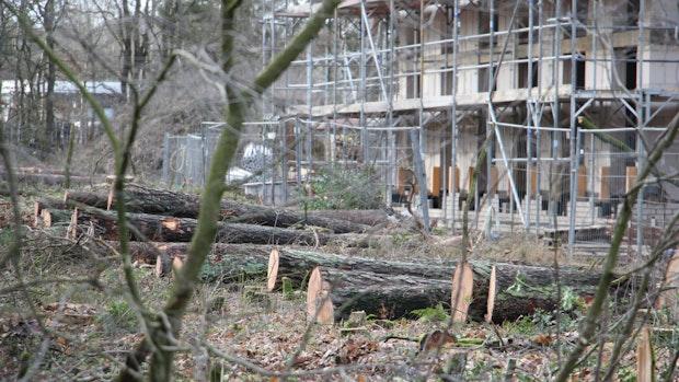 Gefällte Bäume: Nabu fordert Baustopp für Wohncampus