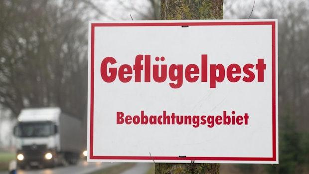 Kreis Cloppenburg hebt Geflügelpest-Sperrbezirk in Bühren auf