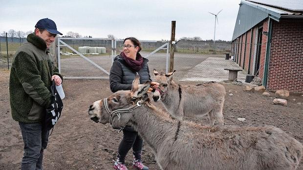 Esel, Lämmer, Hennen: Dieser Bauernhof bietet Besuchern alles