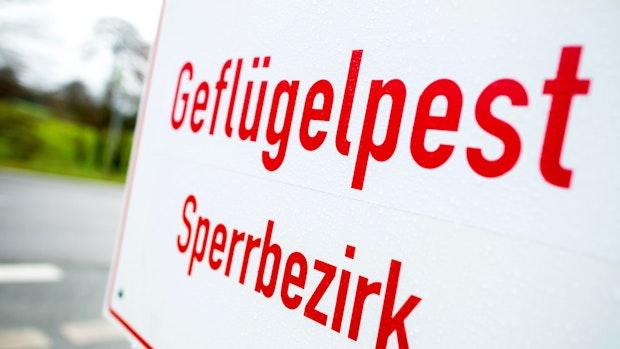 Geflügelpest-Ausbruch im Kreis Vechta: 52.200 Puten und Enten werden getötet