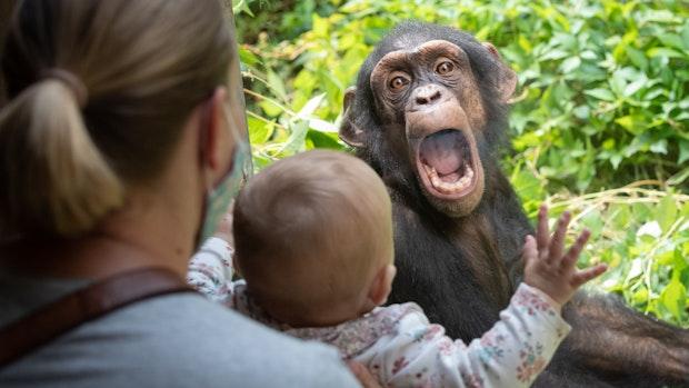 Osnabrücker Zoo muss nach einer Woche wieder schließen