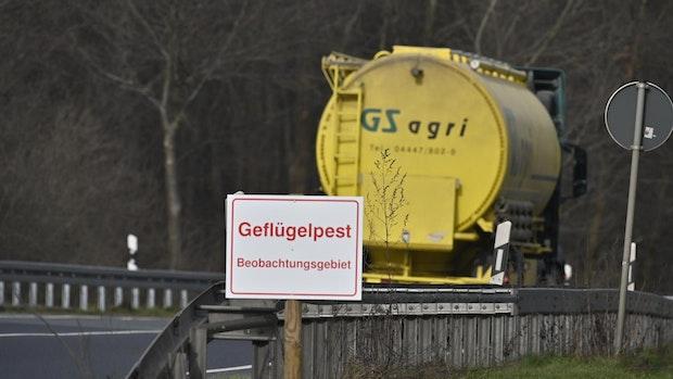 Geflügelpest: Erneut Gänse in Lohne betroffen