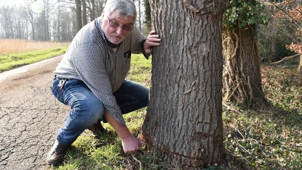 Pro Natura erwägt Strafanzeige gegen Baumfrevel