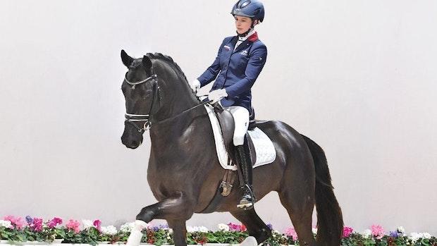 260.000 Euro: Stute D'Amour erzielt den Spitzenpreis