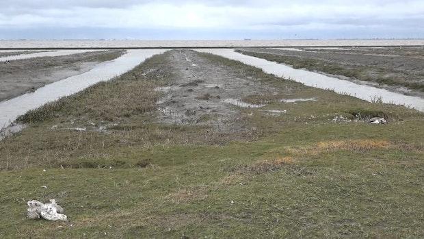 Geflügelpest: Hunderte tote Wildvögel im Nachbarlandkreis Leer entdeckt