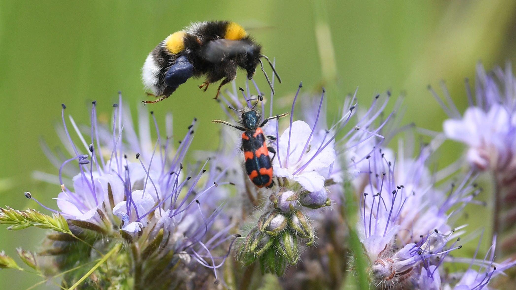 Mehr Insektenschutz: Auch das gehört zu den Zielen des Niedersächsischen Wegs. Foto: dpa