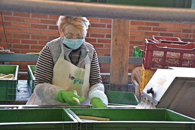 Viel Handarbeit: Sie ist weiterhin nötig und wird von polnischen Saisonkräften erledigt. Foto: Meyer