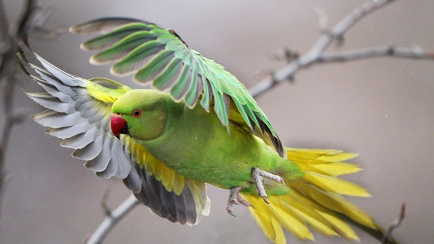 17 Tiere aus Privat-Zoo in Calveslage geklaut