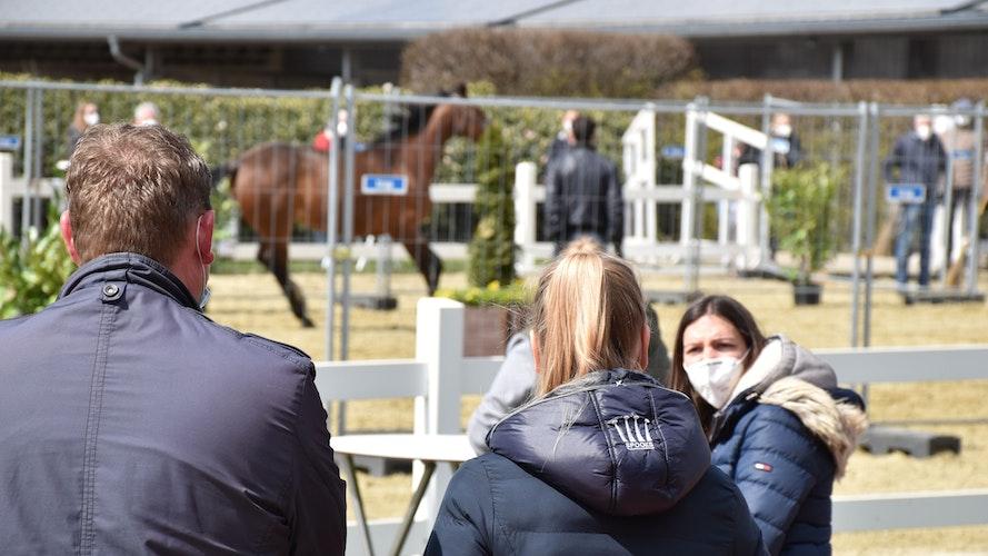 Inaugenscheinnahme: Während die Pferde sich präsentierten, diskutierten die Bieterinnen und Bieter eifrig. Foto: Berg