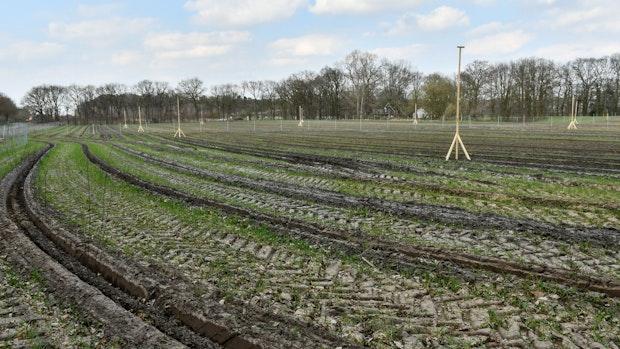 Forstamt pflanzt52.600 Bäume und Sträucher an der Grandorfer Straße