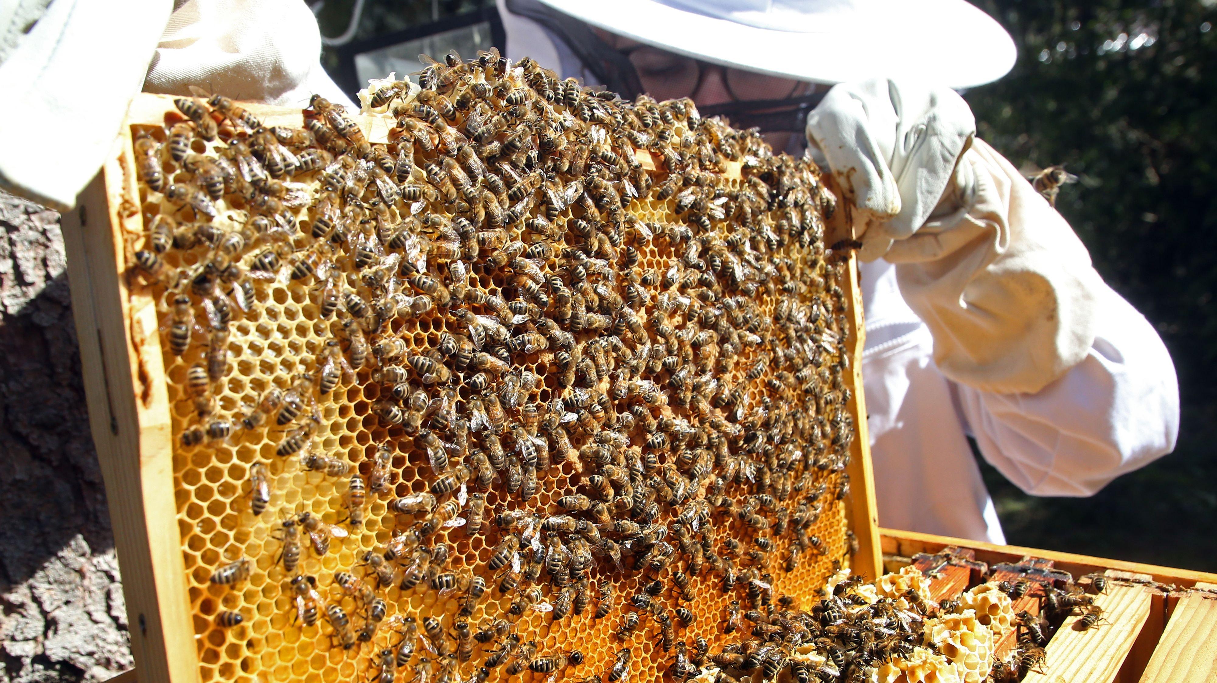 Kontrolle ist wichtig: Das gilt nicht nur für Bienenvölker, sondern auch für Imker. Davon sind die Fraktionen von CDU und SPD im Landtag überzeugt. Foto: dpa/Kumm