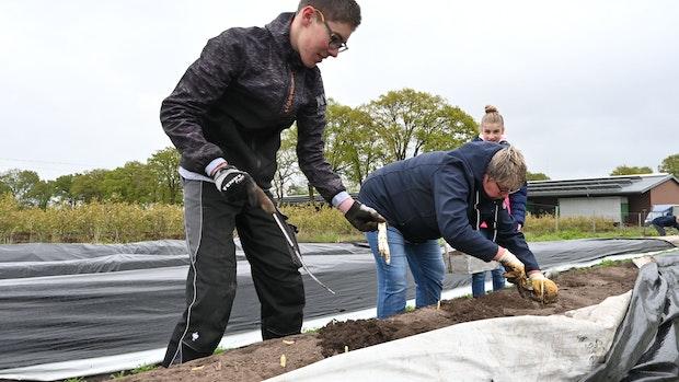 Für Spargel-Stech-Kurs in Bethen machen sich die Teilnehmer krumm