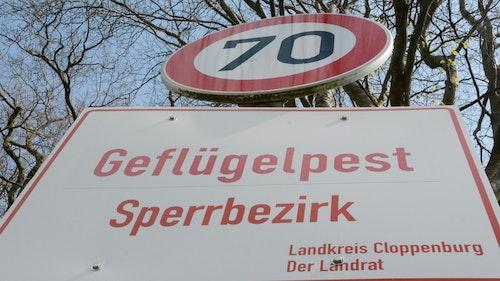 Geflügelpest: Kreis Cloppenburg will Beobachtungsgebiet aufheben
