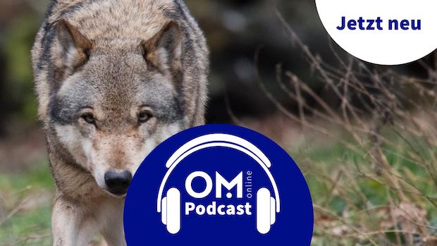 3. Episode des OM online Podcasts: Der Wolf entzweit die Gemüter