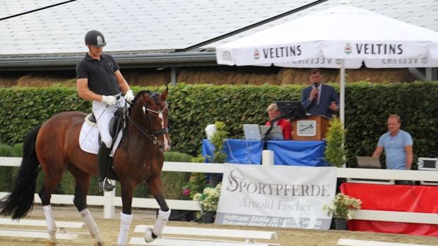 44 Pferde wechseln bei Auktion in Holtrup den Besitzer