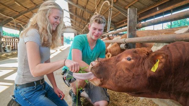 Auf Herz, Nieren und Entrecôte: Landwirte bieten Cow-Sharing an