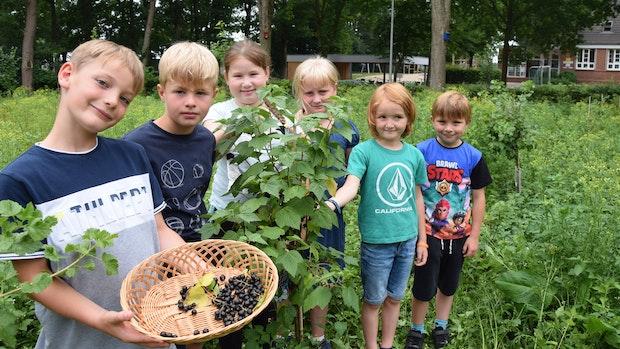Thüler Grundschüler können bald die Früchte ihrer Arbeit ernten