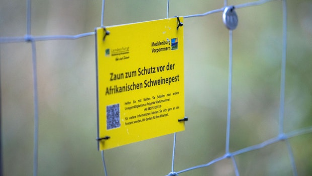 Schweinepest: Behörden vor Ort sind in Alarmbereitschaft