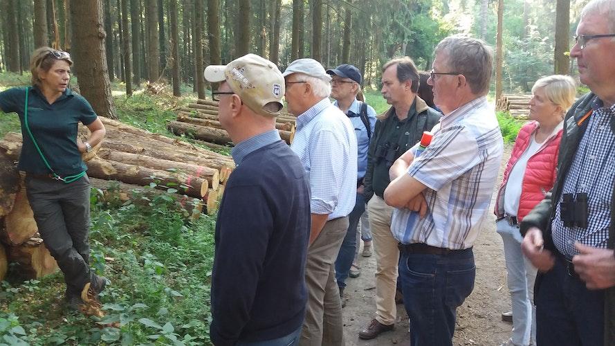Bezirksförsterin Dorothea Kreinberg informiert die Teilnehmer der naturkundlichen Wanderung in den Dammer Bergen über den Holzverkauf. Foto: Heitlage
