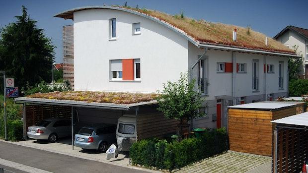 Die Stadt Lohne fördert grüne Dächer und Fassaden sowie private Wasserspeicher