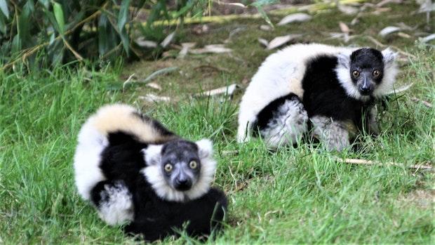 Jetzt steht fest: Putzige Sonnenanbeter im Tierpark Thüle sind Jungs